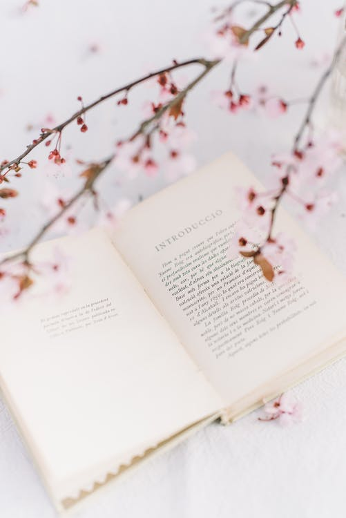Opened Book through Pink Flowers on a Branch