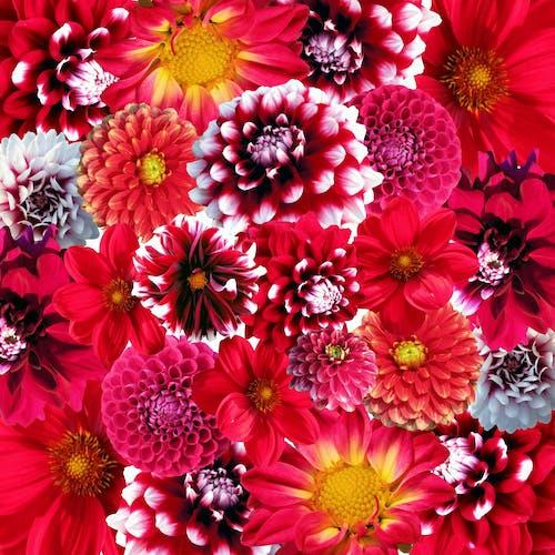 bitki örtüsü, bitkiler, çiçek, Çiçek açmak içeren Ücretsiz stok fotoğraf