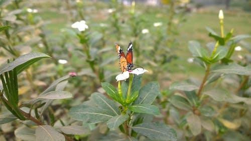 Fotobanka sbezplatnými fotkami na tému makro, makrofotografia, motýľ, motýľ na kvete