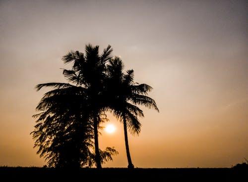 Foto profissional grátis de adorável, coqueiro, dourado, pôr do sol