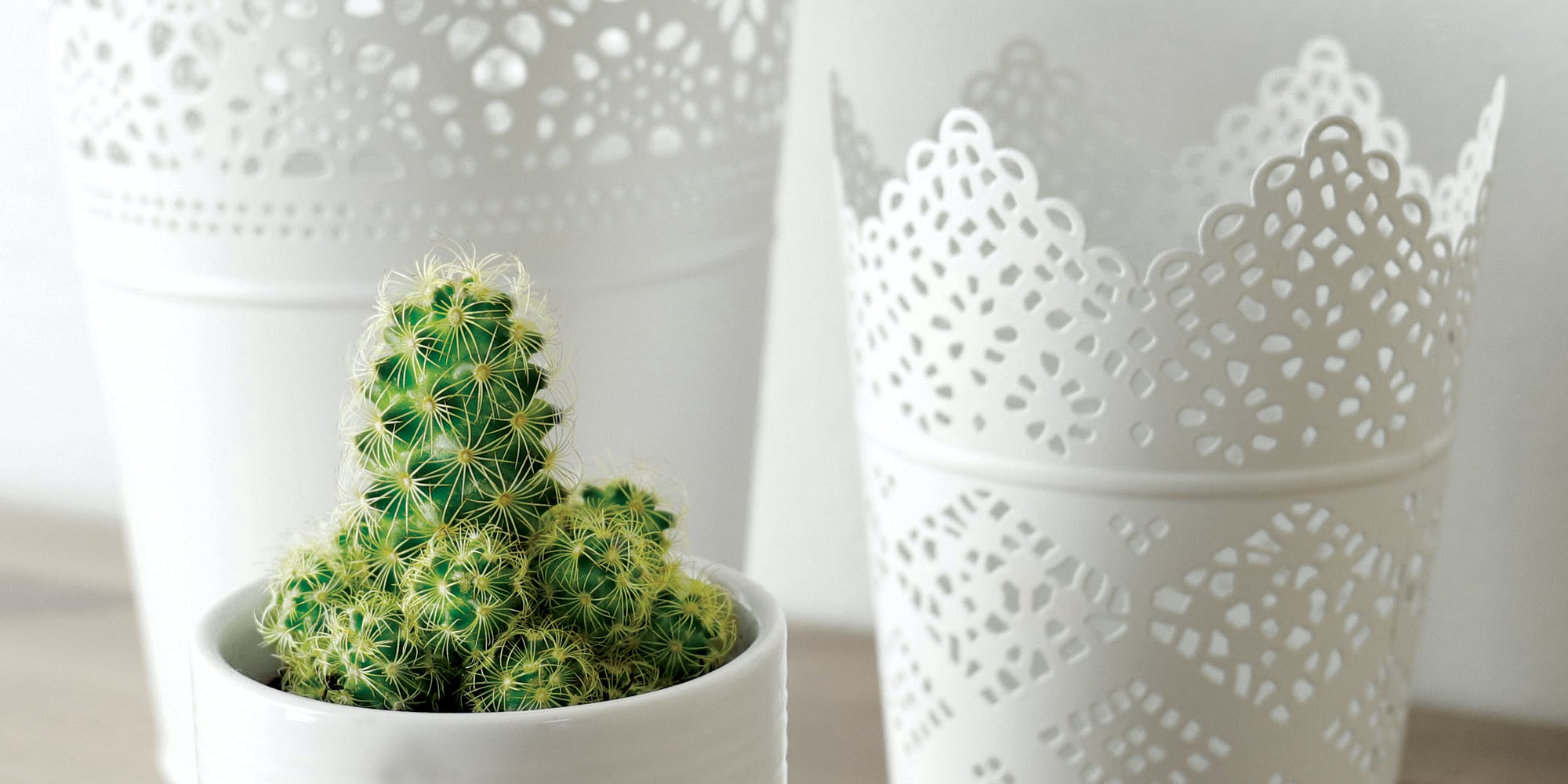 Cactus Plant and White Ceramic Pot