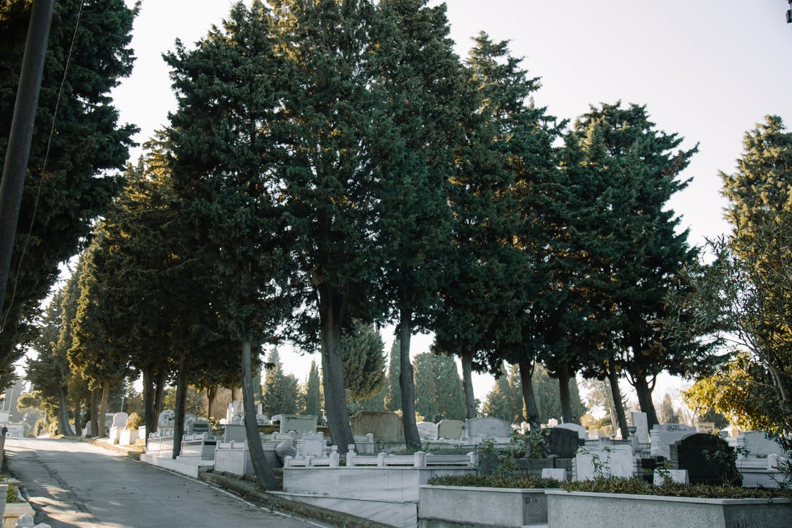 Aged cemetery with green trees