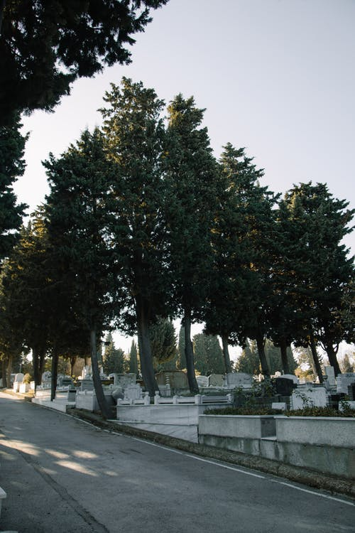 Empty asphalt road going through green trees near cemetery with stone graves in sunny day