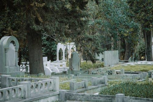 Gratis lagerfoto af ældet, begravelsesplads, botanik
