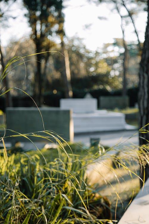 Gratis lagerfoto af ældet, begravelsesplads, blødt fokus