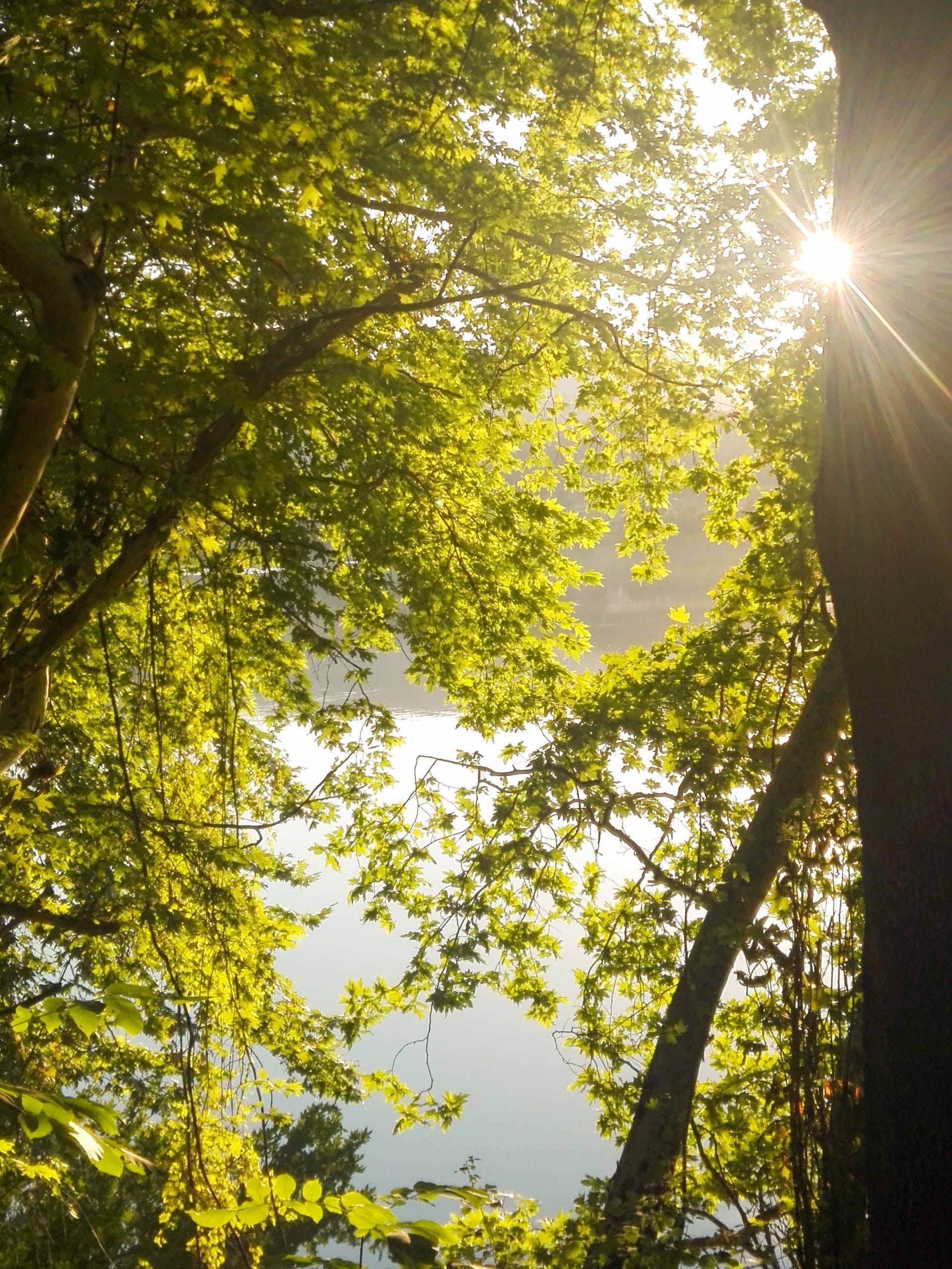 Kostenloses Stock Foto zu aliakmonas, bäume, griechenland, grün