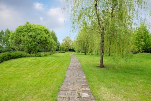 Foto d'estoc gratuïta de a l'aire lliure, arbre, botànica