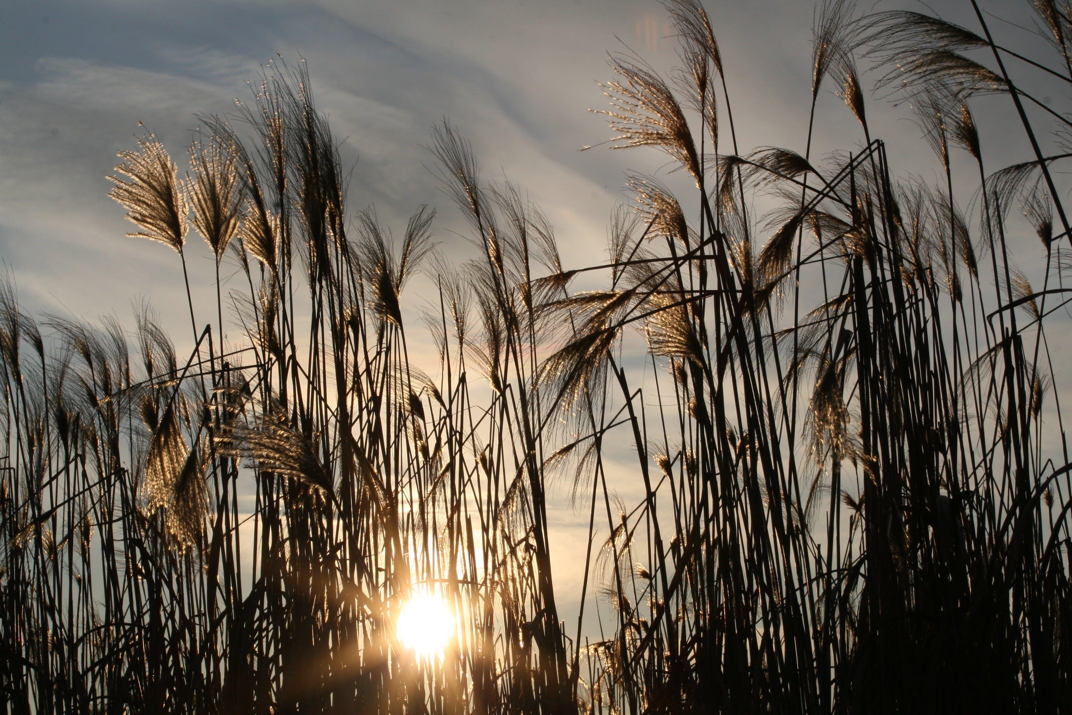Kostenloses Stock Foto zu gras, grasfläche, himmel, natur