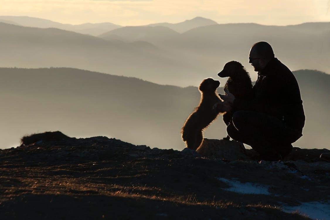 友誼在高層次, 可愛的動物, 山
