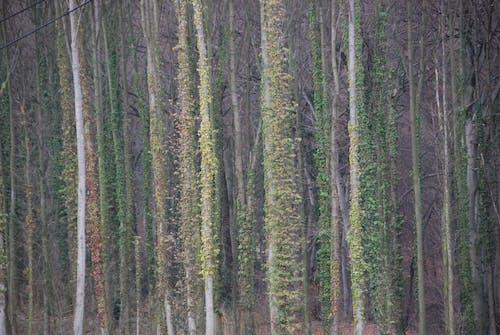 木, 森林の無料の写真素材