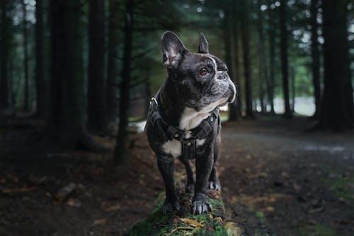 Foto profissional grátis de animal, animal de estimação, animal doméstico