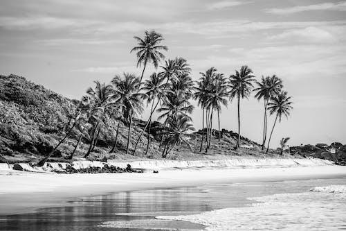 Kostenloses Stock Foto zu insel, kokosnussbäume, meer