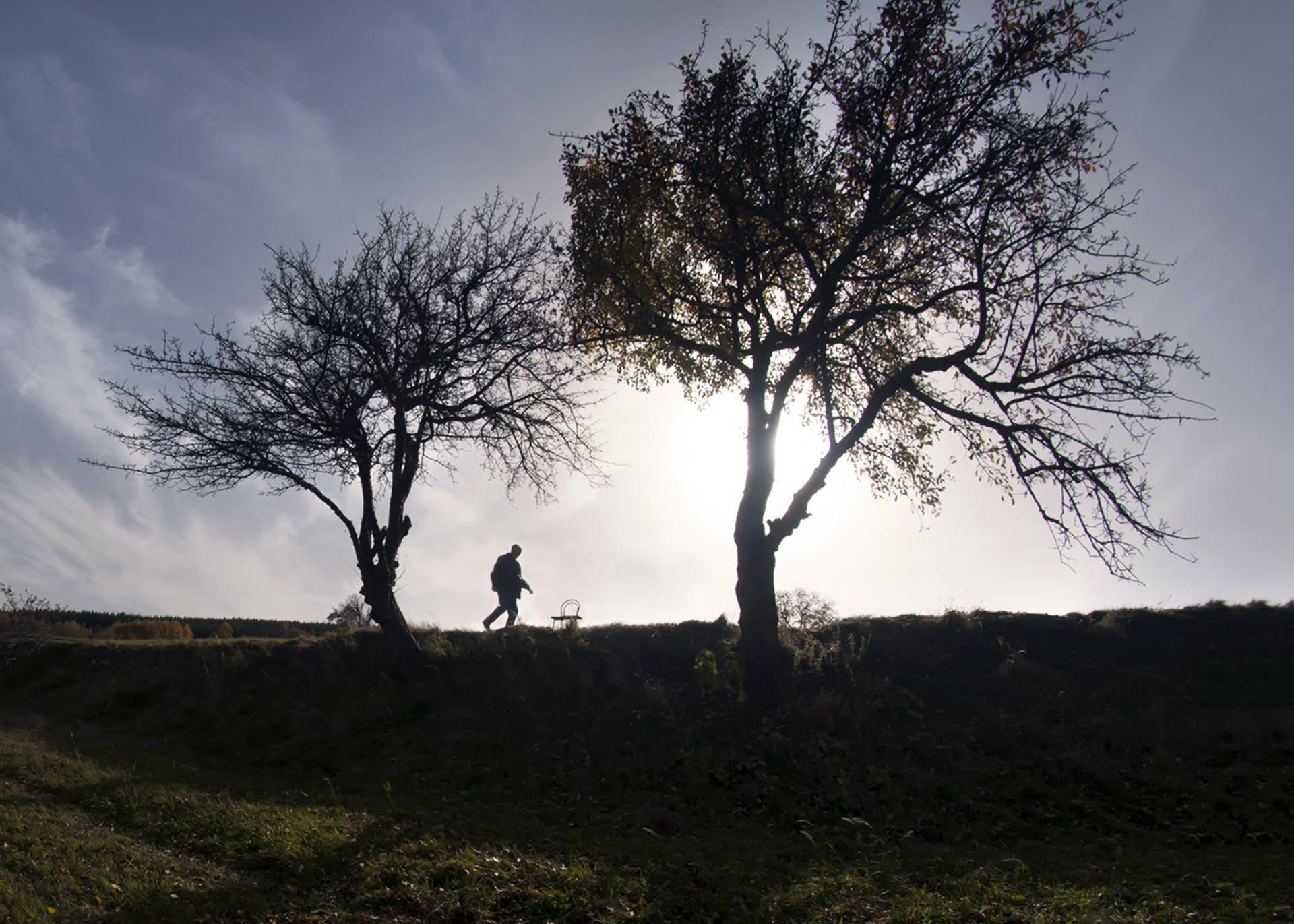 Black Tree in Land