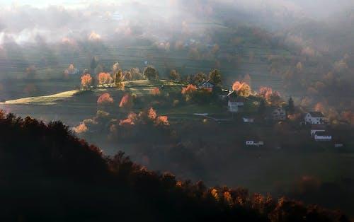 Foto profissional grátis de ao ar livre, árvores, borrão, casas