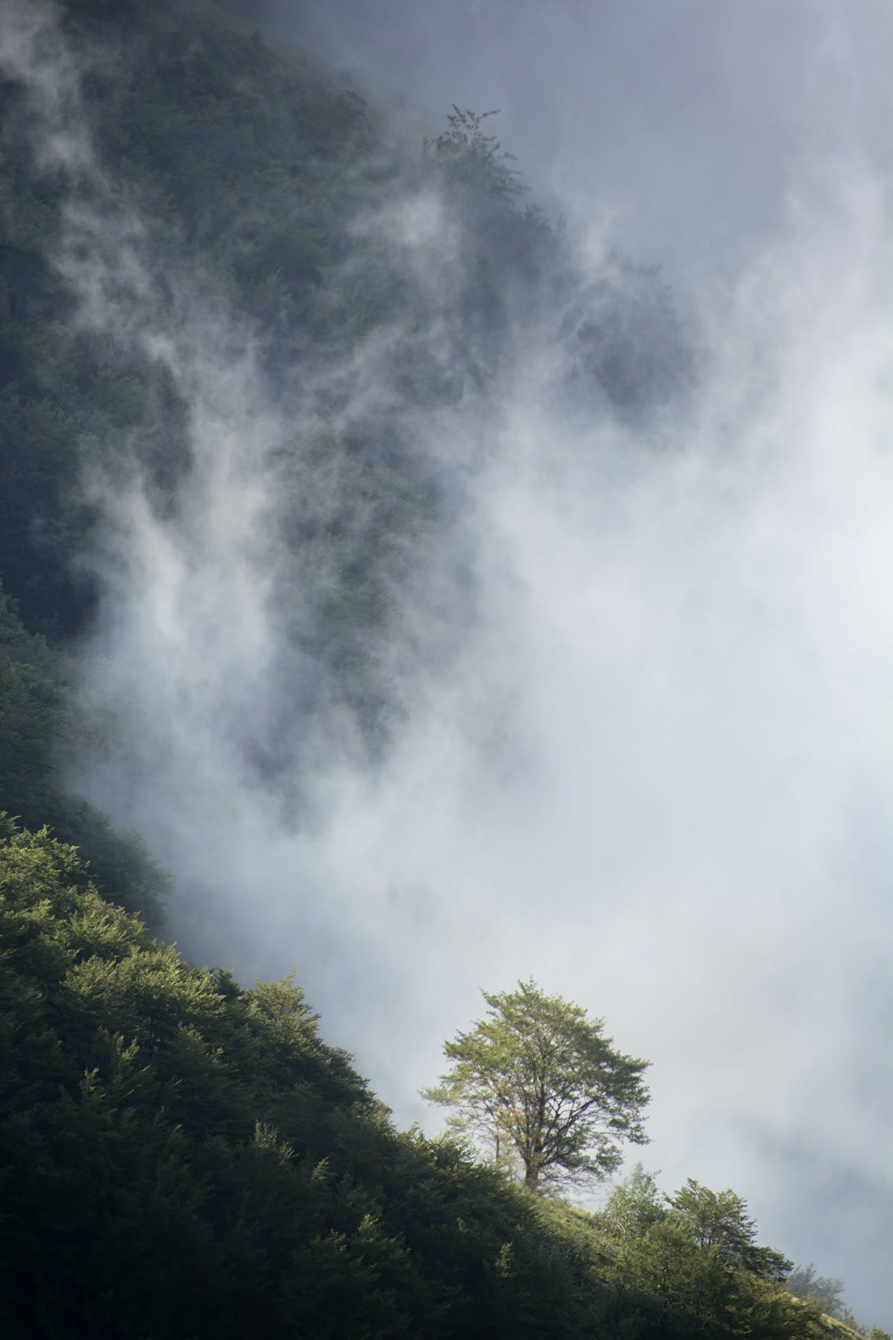 Green Tree Below White Sky