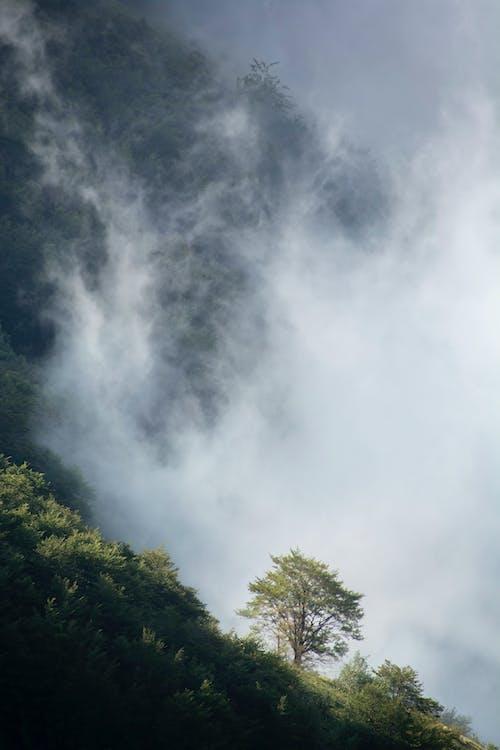 Ingyenes stockfotó alkonyat, erdő, eső témában