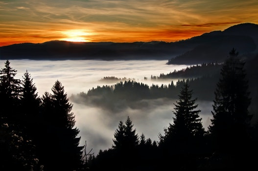 Silhouette Photography of Trees and Mountain