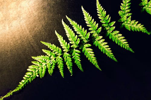 Free stock photo of ecology, environment, environmental, fern