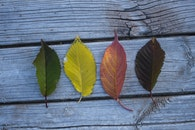 Four Leaves on Wooden Board