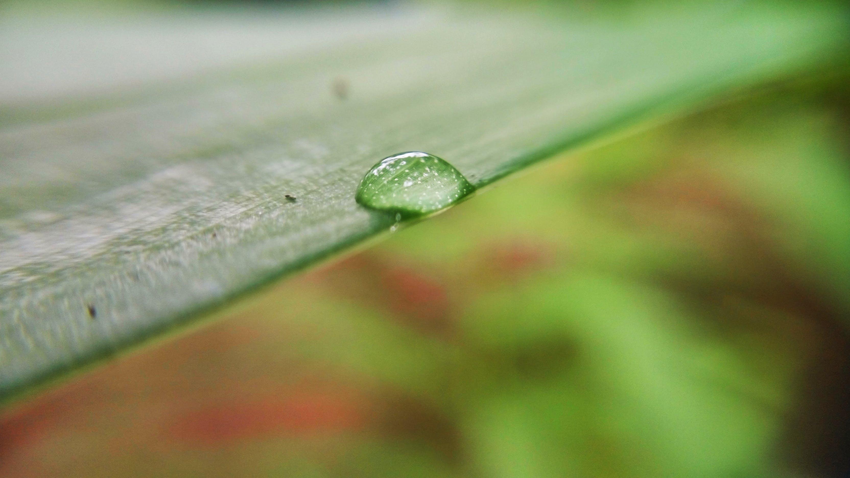Water Drop on Leaf