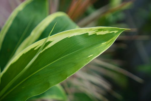 Kostnadsfri bild av bakgrund, bokeh, grön