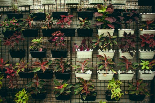 Assorted plants in plastic containers