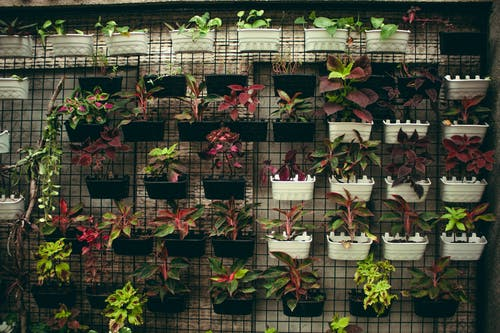 Collection of assorted plants with colorful leaves hanging on wall in plastic flowerpots in floral market with abundance of flowers