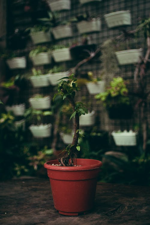 Potted plant in flower shop