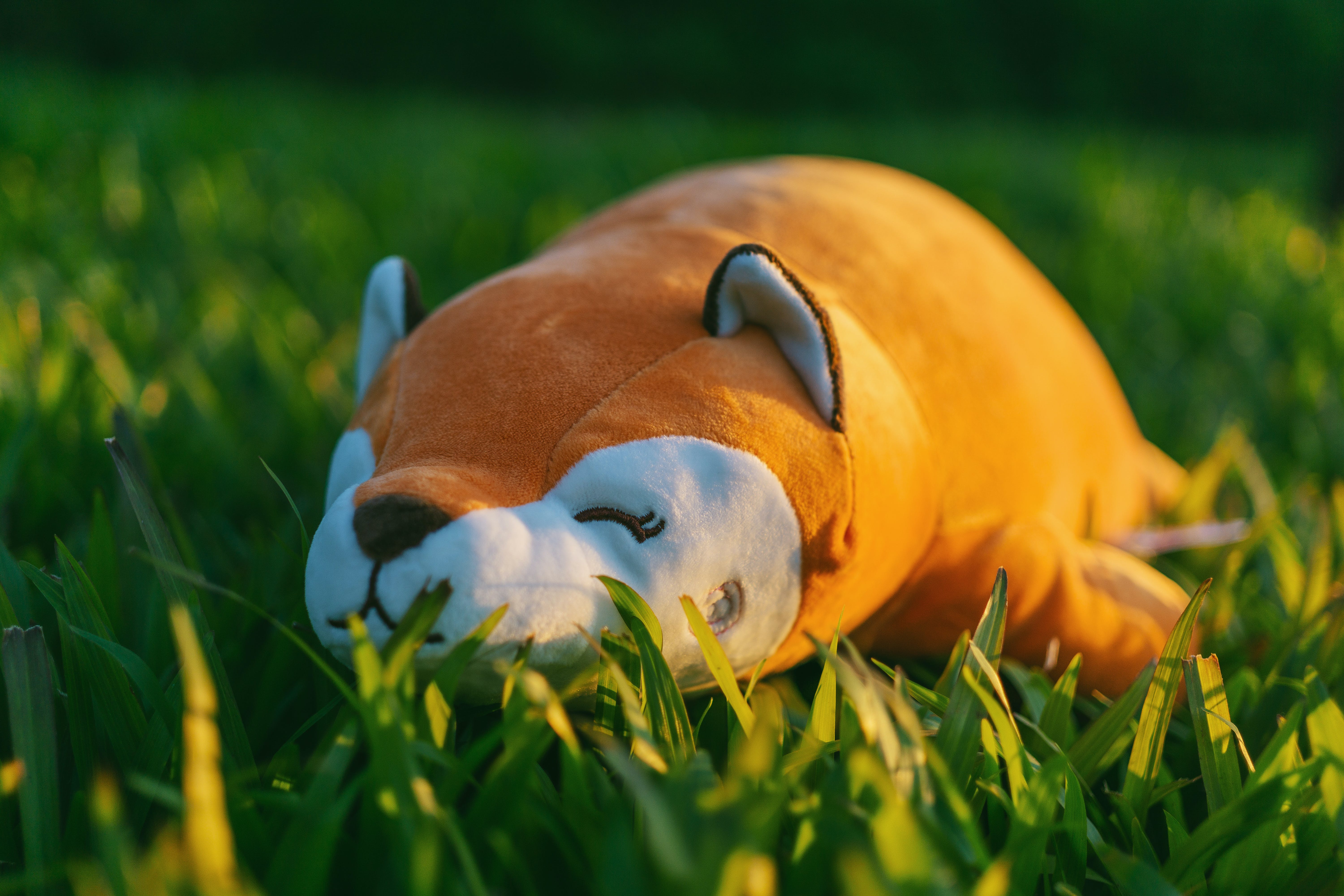Orange and White Animal Plush Toy on Green Grasses in Focus Photography