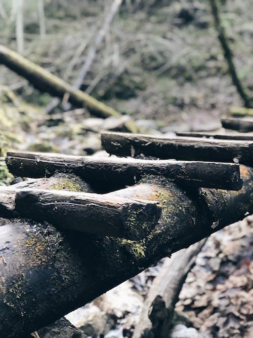 Free stock photo of bridge, woods