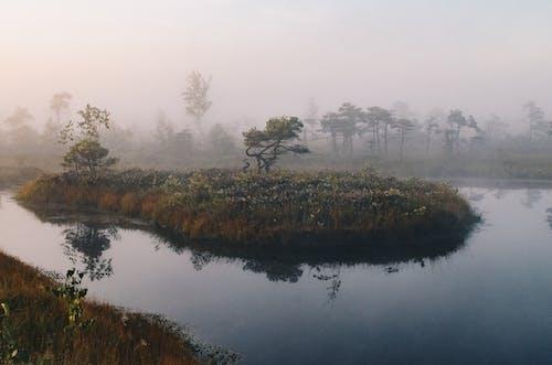 Free stock photo of foggy swamp, island, nature