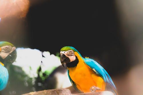 Základová fotografie zdarma na téma báječný, divočina, fotografie