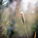 field, grass, plant