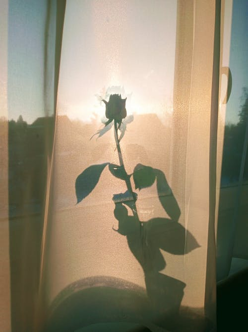 Blossoming flower shade with gentle bud and wavy leaves on tulle curtain against window in soft sunlight