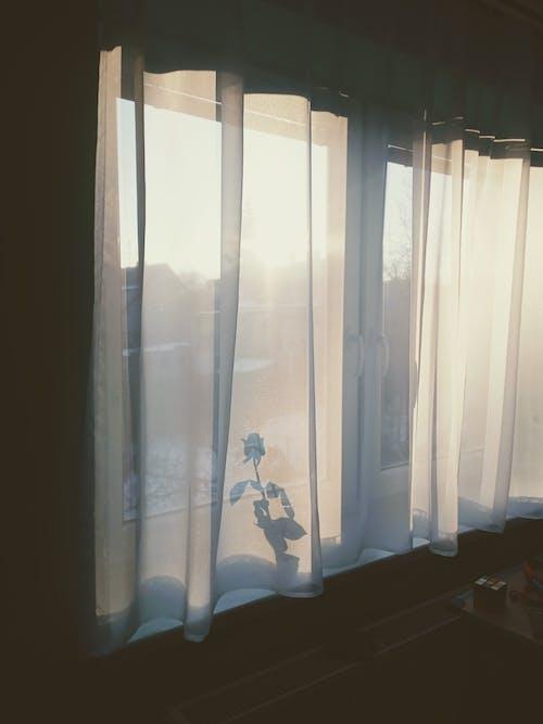 Photos gratuites de à l'intérieur, angiospermes, appui de fenêtre