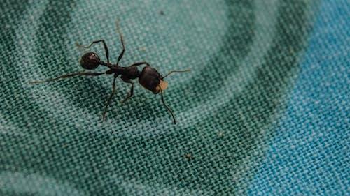 Δωρεάν στοκ φωτογραφιών με έντομο, Εξωτερικός χώρος, ζώο, μαύρο μυρμήγκι