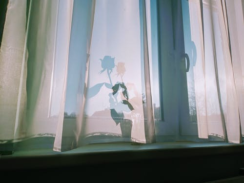 Blossoming flower with wavy foliage in vase on windowsill against curtain with shade in sunlight