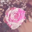 blur, flower, pink