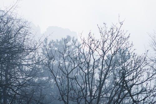 剪影, 夢想的, 大霧天 的 免費圖庫相片
