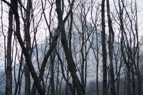 光禿禿的樹木, 冬季, 山 的 免費圖庫相片