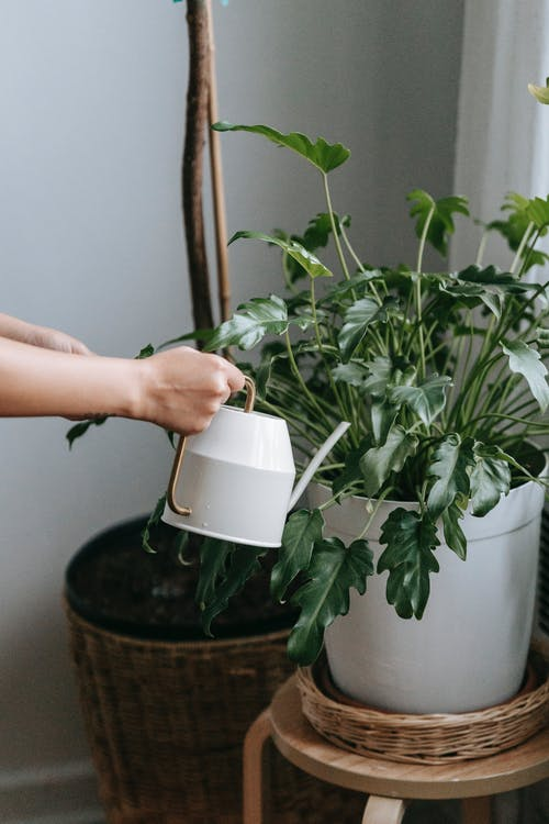 Faceless person with watering can