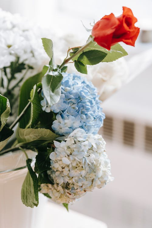 Bunch of fragrant blooming hydrangeas and rose with green leaves in vase in daylight