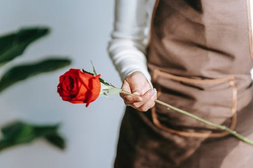 Crop anonymous female florist in apron standing in floral shop with blooming red rose