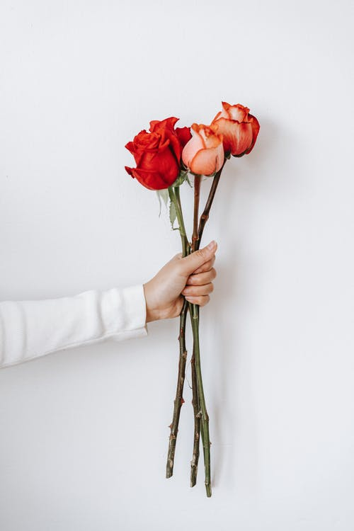 Crop person showing blooming rose bouquet with pleasant scent