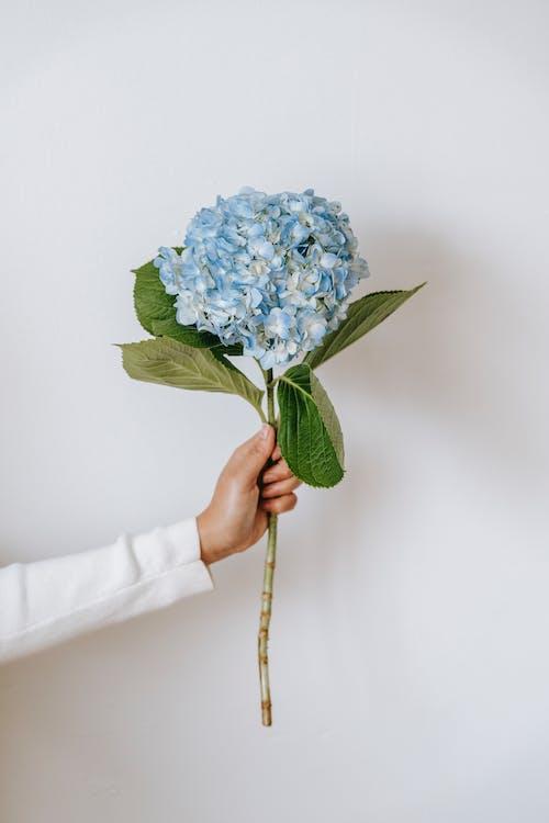 곡선, 기관지, 꽃의 무료 스톡 사진