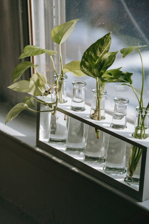 Безкоштовне стокове фото на тему «araceae, epipremnum, багаторічна рослина»