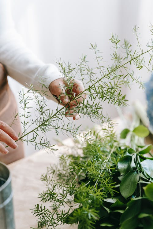Crop anonymous woman with evergreen plant sprig with tiny leaves on thin stalk above table at work