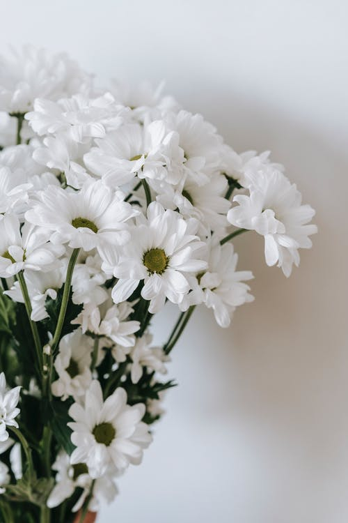 Blossoming flowers with thin stems and wavy gentle petals with pleasant aroma on white background