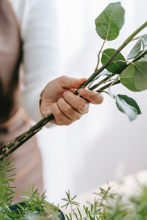Crop anonymous woman holding green plant stems with foliage while composing bouquet against Asparagus plant sprigs at work