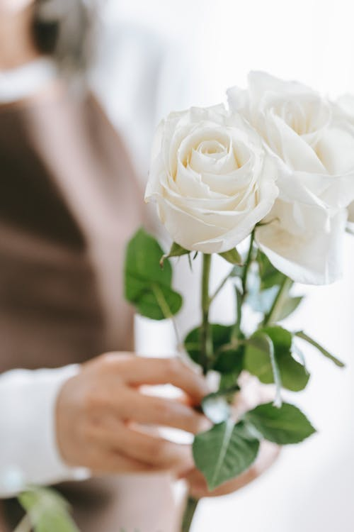 Crop anonymous woman demonstrating blossoming white flowers with gentle buds and pleasant aroma on blurred background